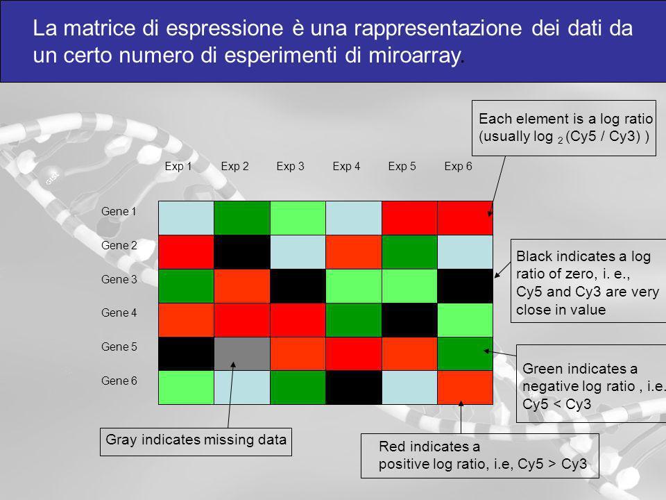 La matrice di espressione è una rappresentazione dei dati da un certo numero di esperimenti di miroarray.