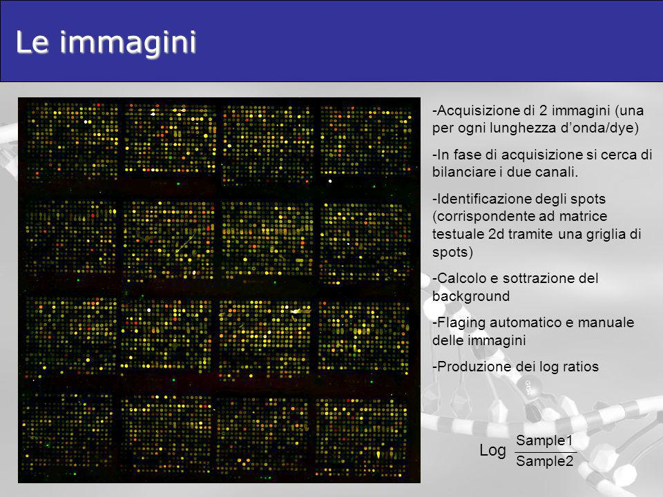 Le immagini Acquisizione di 2 immagini (una per ogni lunghezza d'onda/dye) In fase di acquisizione si cerca di bilanciare i due canali.