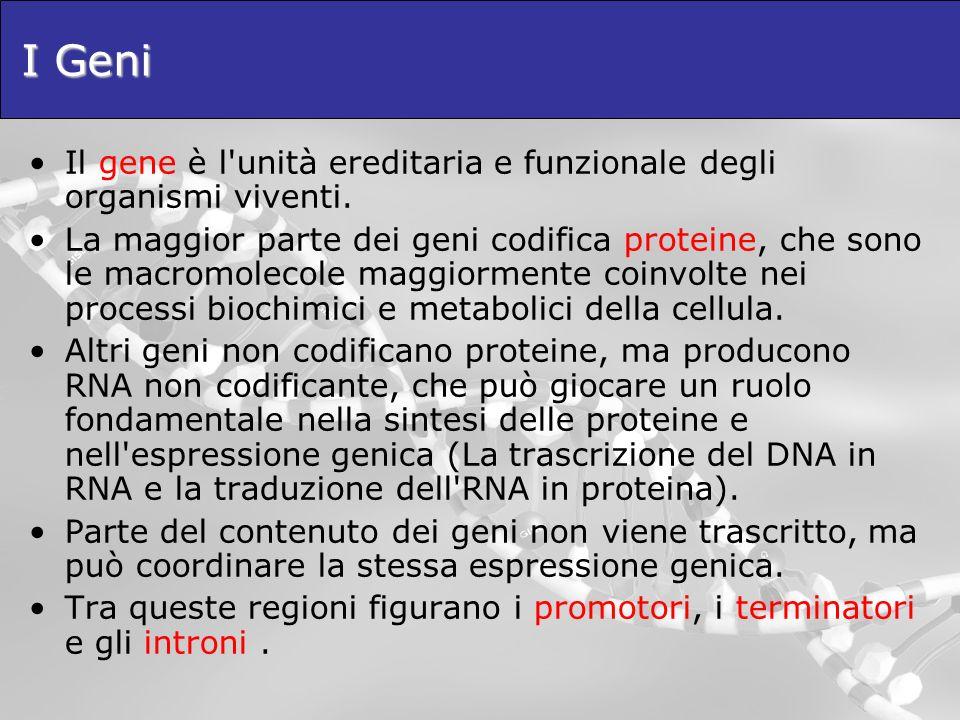 I Geni Il gene è l unità ereditaria e funzionale degli organismi viventi.