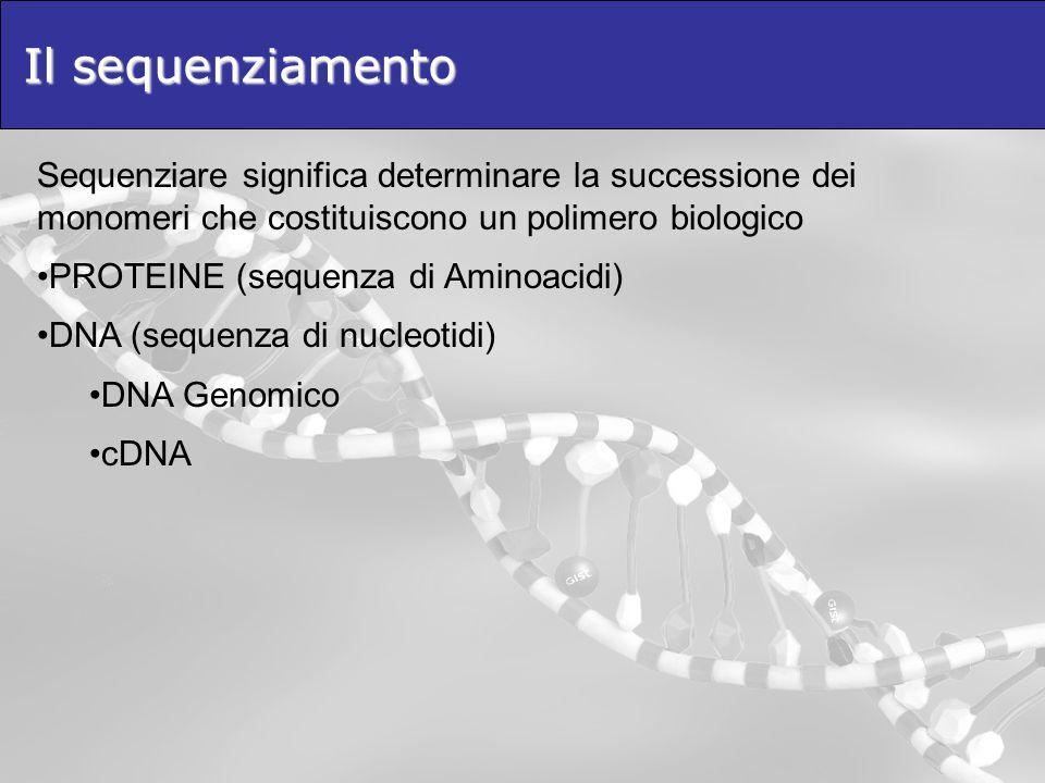 Il sequenziamento Sequenziare significa determinare la successione dei monomeri che costituiscono un polimero biologico.
