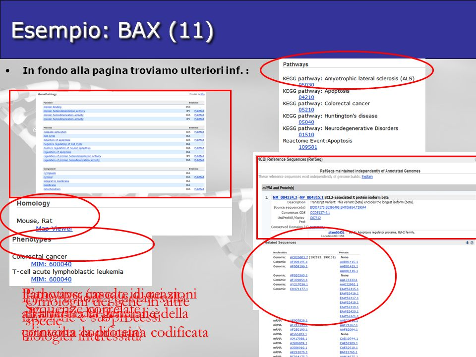 Esempio: BAX (11) In fondo alla pagina troviamo ulteriori inf. :