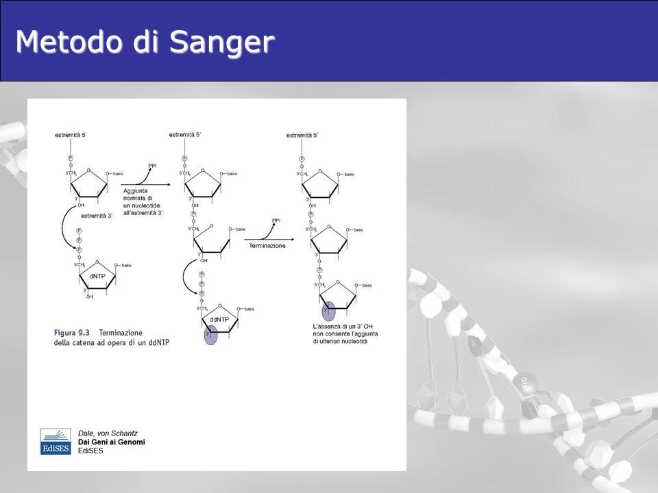 Metodo di Sanger