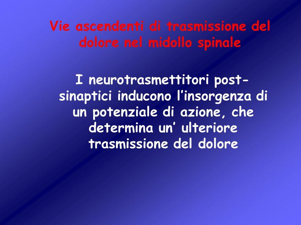 Vie ascendenti di trasmissione del dolore nel midollo spinale