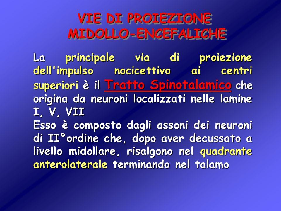 VIE DI PROIEZIONE MIDOLLO-ENCEFALICHE