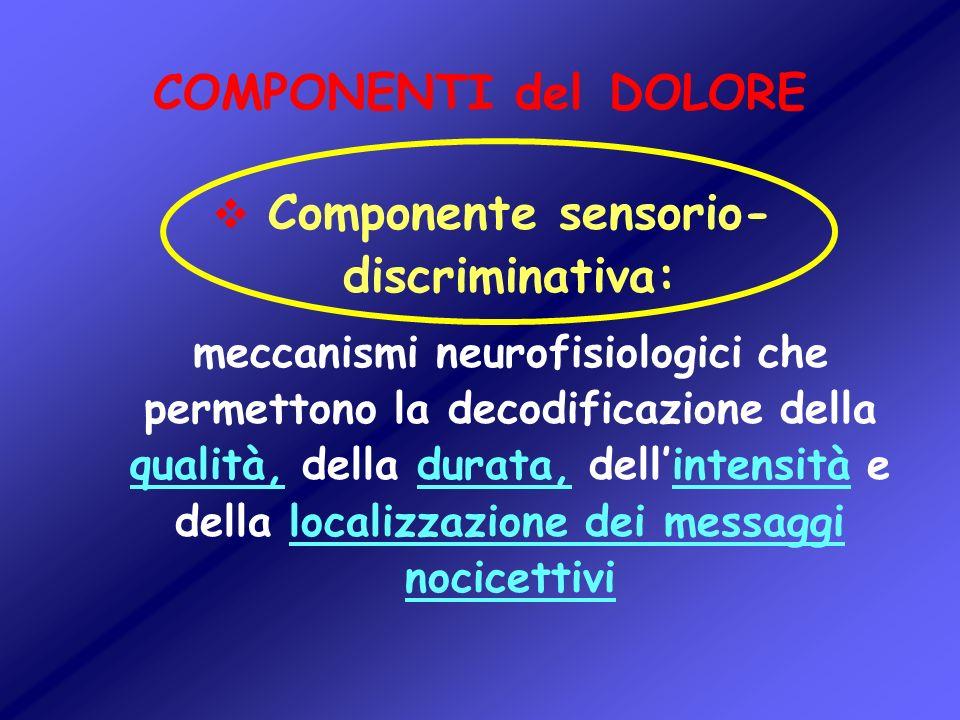 Componente sensorio-discriminativa: