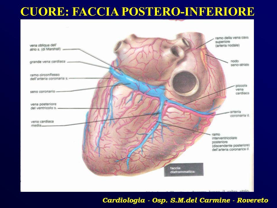 CUORE: FACCIA POSTERO-INFERIORE