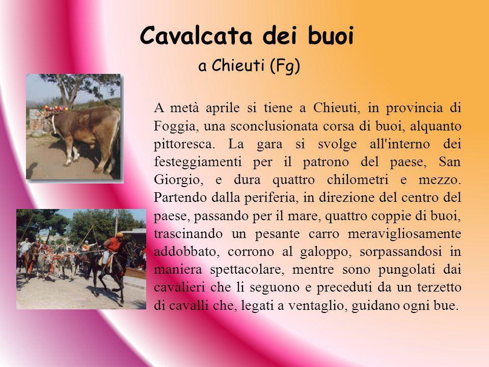 Cavalcata dei buoi a Chieuti (Fg)