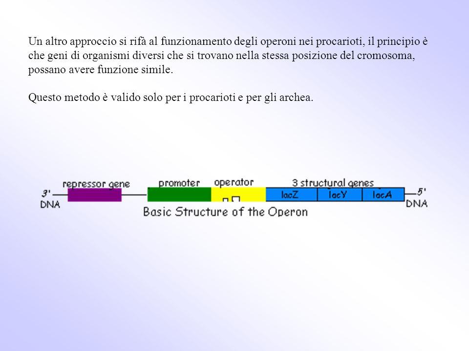 Un altro approccio si rifà al funzionamento degli operoni nei procarioti, il principio è che geni di organismi diversi che si trovano nella stessa posizione del cromosoma, possano avere funzione simile.