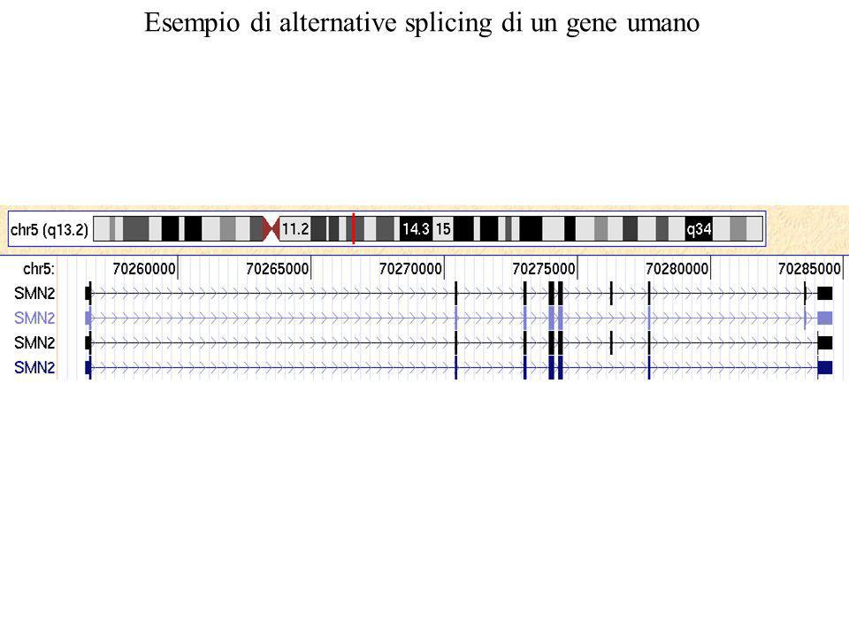 Esempio di alternative splicing di un gene umano