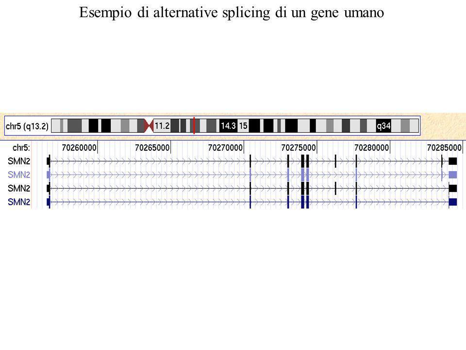 Esempio di alternative splicing di un gene umano