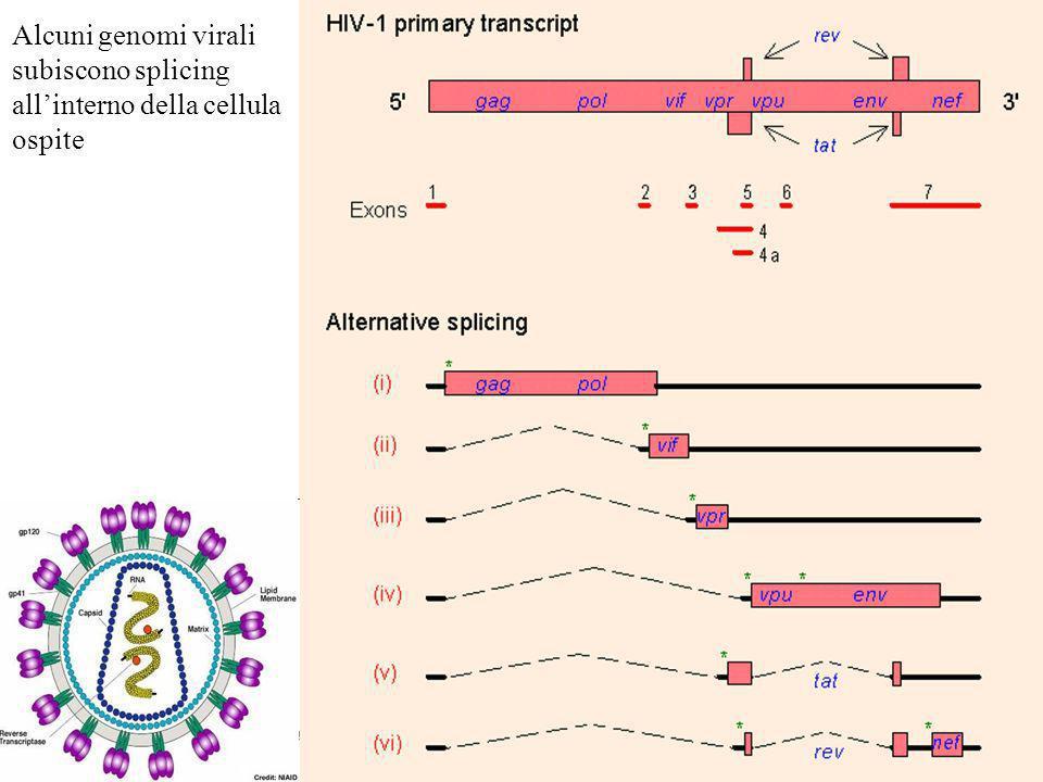 Alcuni genomi virali subiscono splicing all'interno della cellula ospite