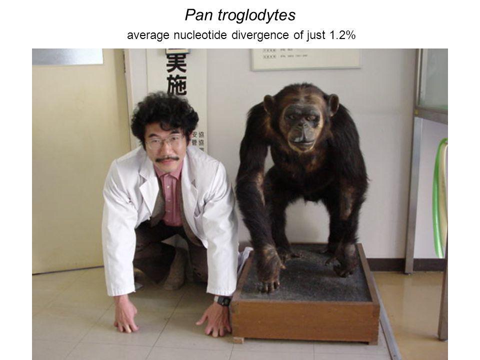 Pan troglodytes average nucleotide divergence of just 1.2%