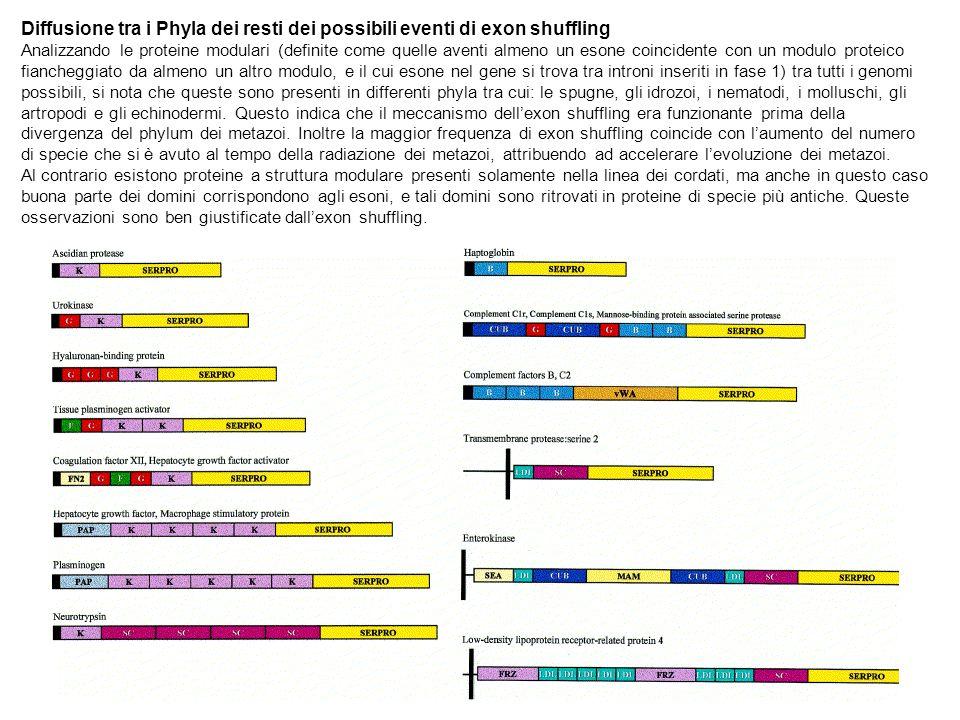 Diffusione tra i Phyla dei resti dei possibili eventi di exon shuffling