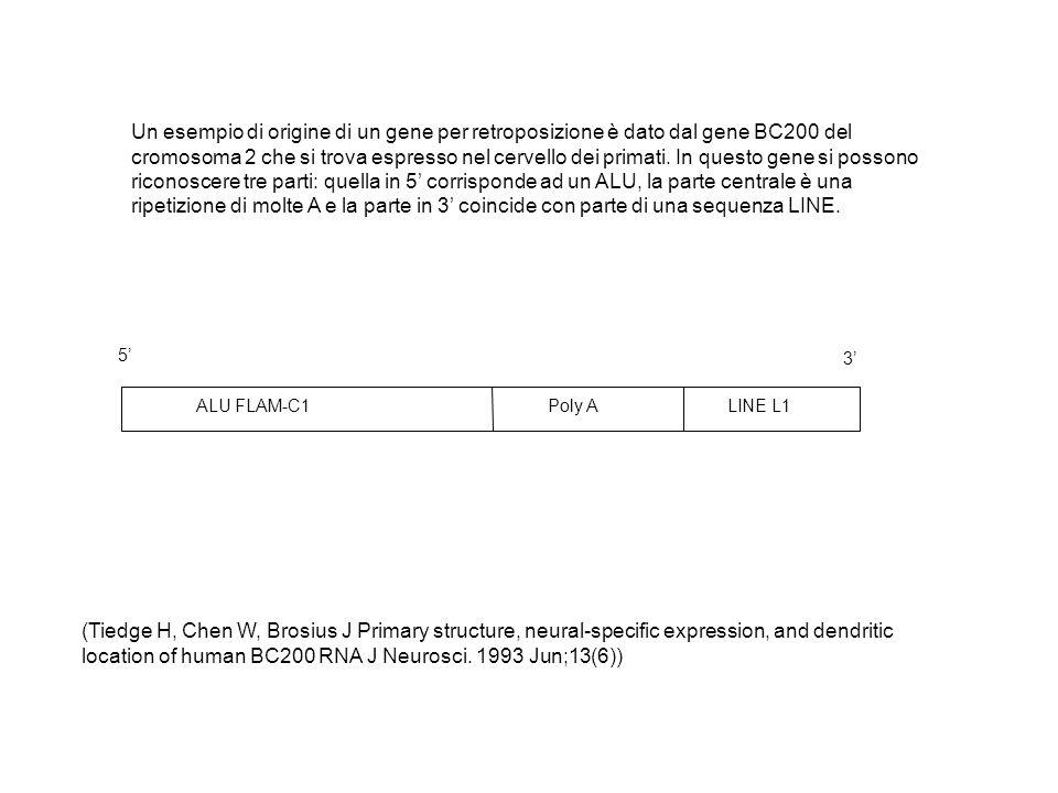 Un esempio di origine di un gene per retroposizione è dato dal gene BC200 del cromosoma 2 che si trova espresso nel cervello dei primati. In questo gene si possono riconoscere tre parti: quella in 5' corrisponde ad un ALU, la parte centrale è una ripetizione di molte A e la parte in 3' coincide con parte di una sequenza LINE.