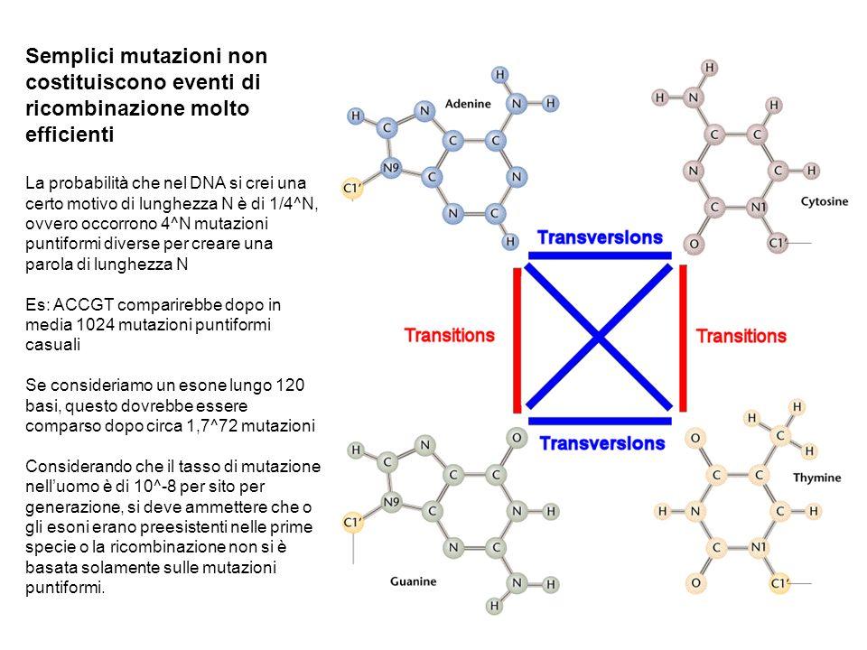 Semplici mutazioni non costituiscono eventi di ricombinazione molto efficienti
