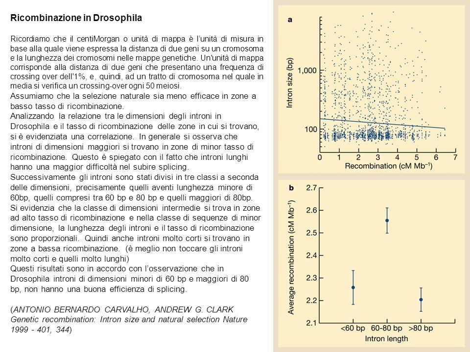 Ricombinazione in Drosophila