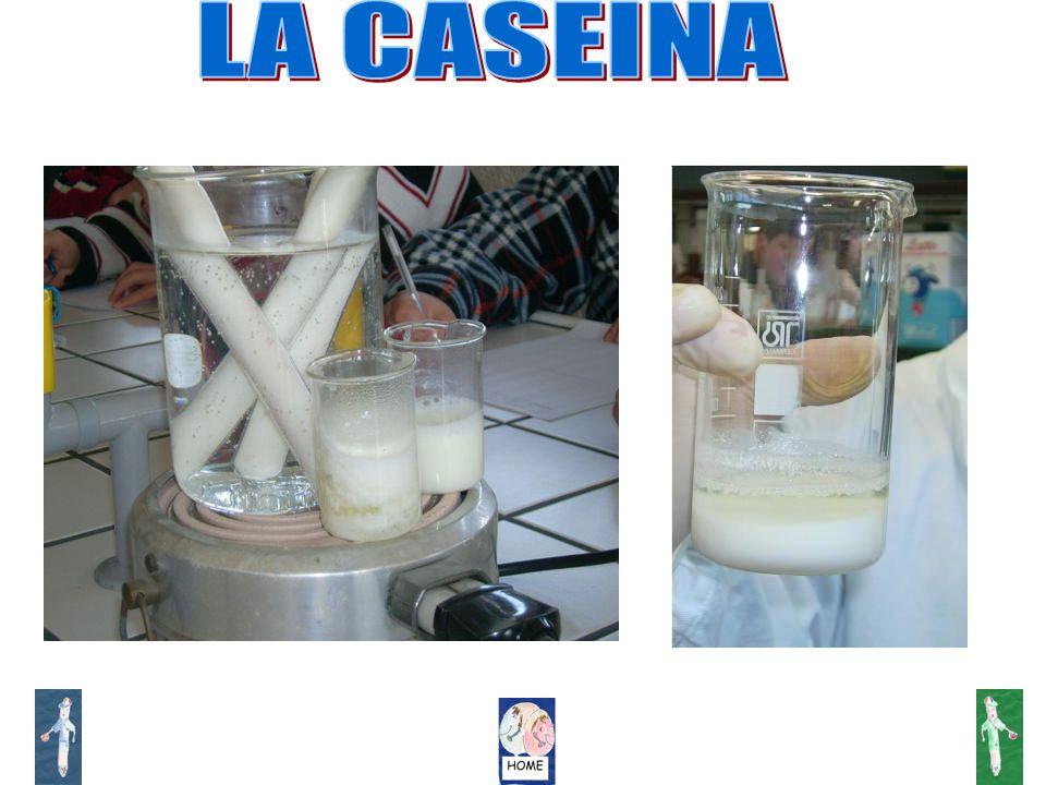 LA CASEINA