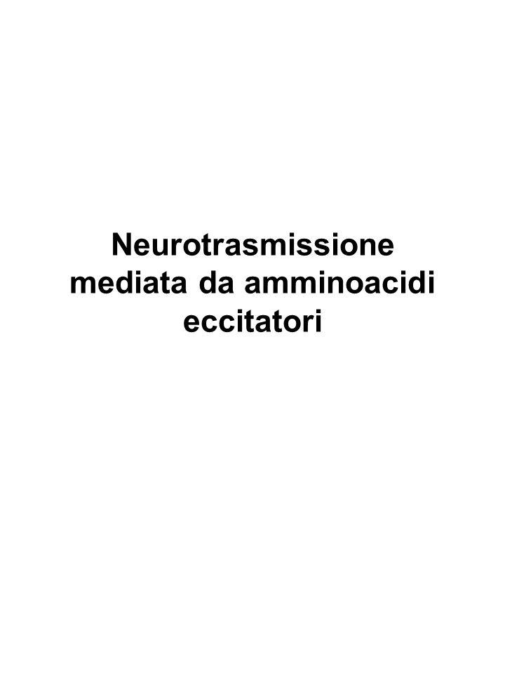 Neurotrasmissione mediata da amminoacidi eccitatori