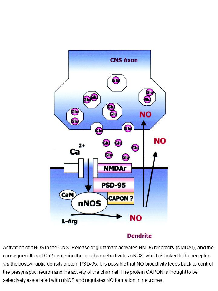 Activation of nNOS in the CNS