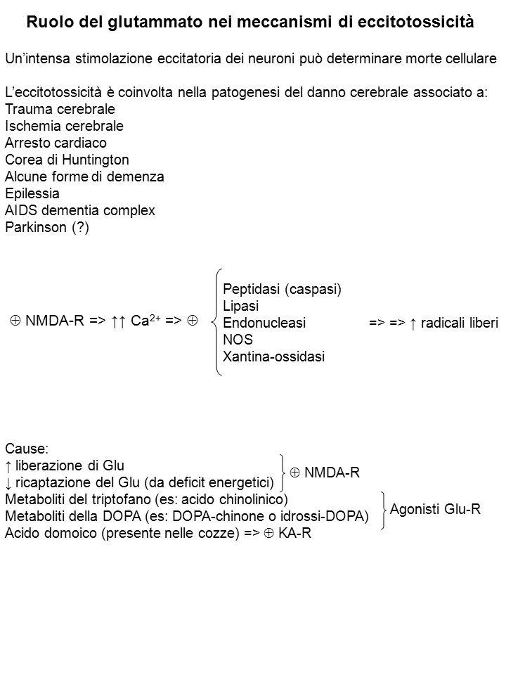 Ruolo del glutammato nei meccanismi di eccitotossicità