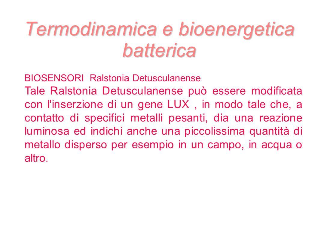 Termodinamica e bioenergetica batterica