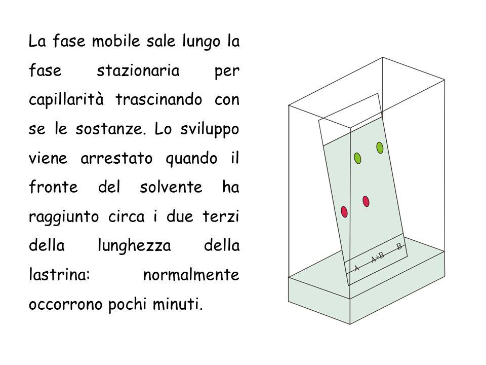 La fase mobile sale lungo la fase stazionaria per capillarità trascinando con se le sostanze.