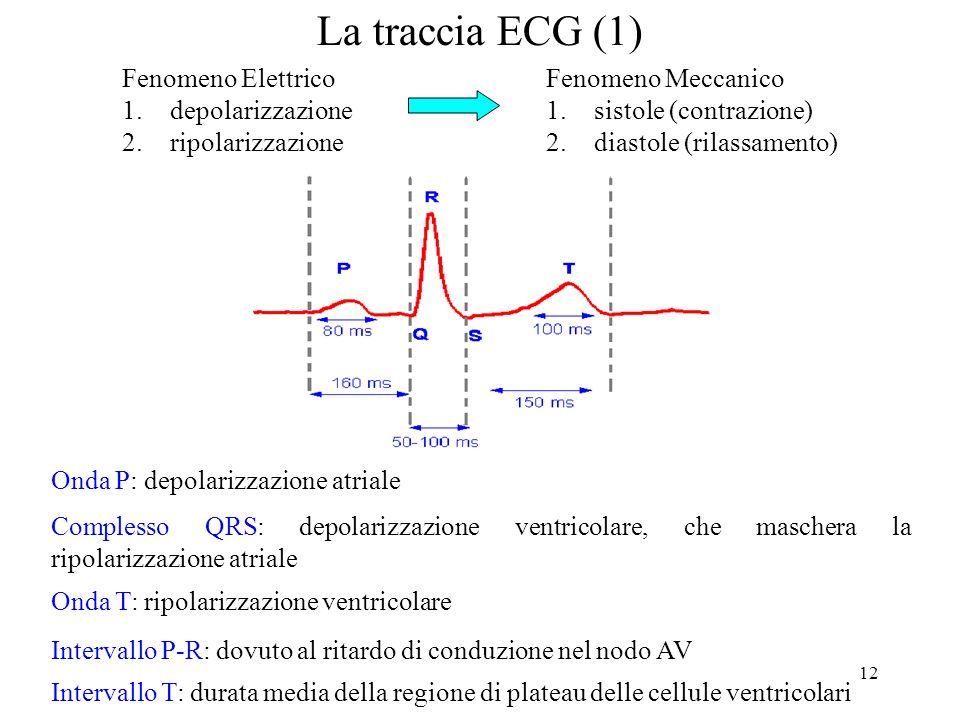 La traccia ECG (1) Fenomeno Elettrico depolarizzazione