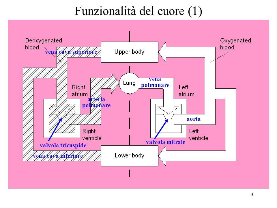 Funzionalità del cuore (1)