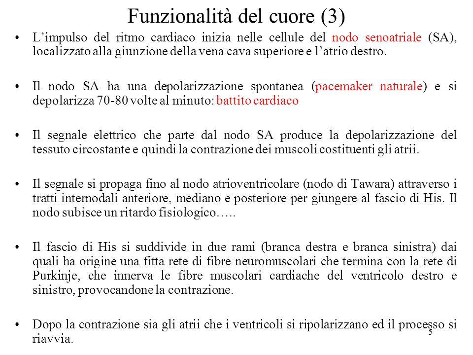 Funzionalità del cuore (3)