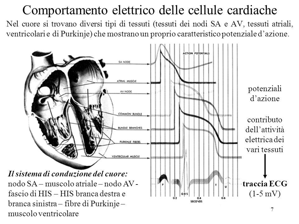 Comportamento elettrico delle cellule cardiache