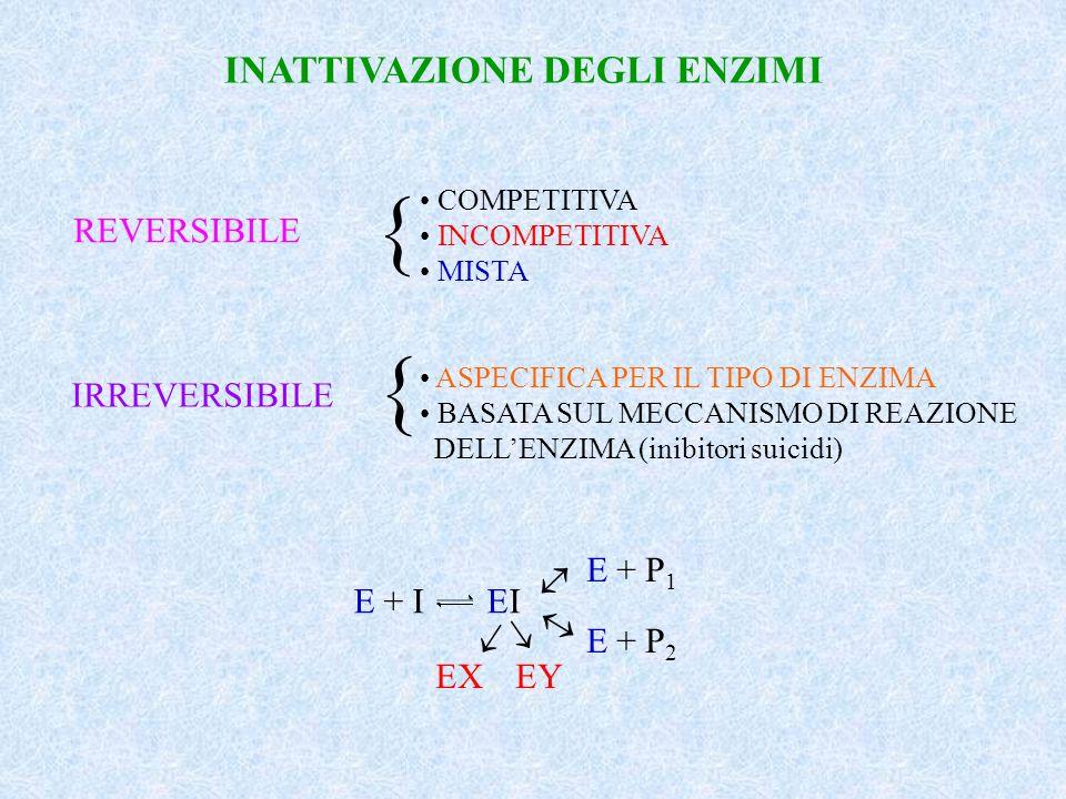 { { INATTIVAZIONE DEGLI ENZIMI REVERSIBILE IRREVERSIBILE E + P1 