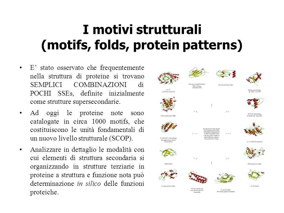I motivi strutturali (motifs, folds, protein patterns)