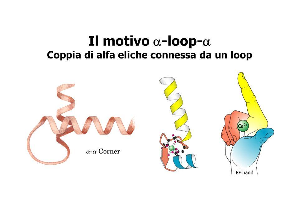 Il motivo a-loop-a Coppia di alfa eliche connessa da un loop