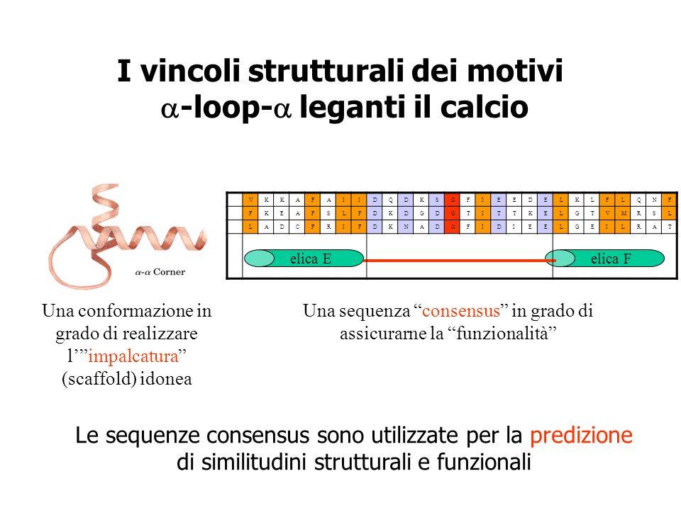 I vincoli strutturali dei motivi a-loop-a leganti il calcio