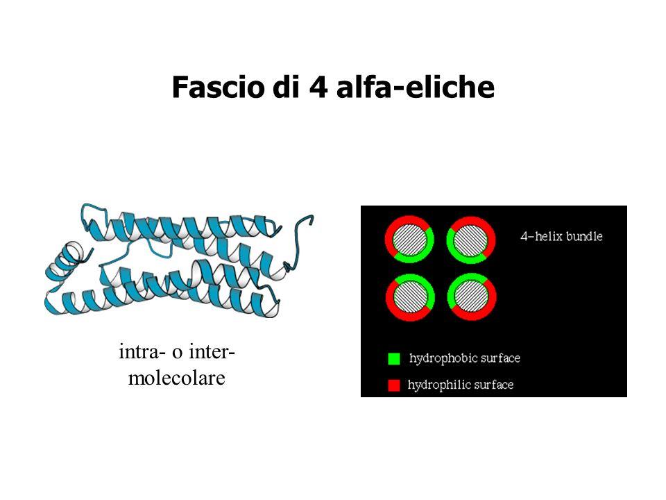 Fascio di 4 alfa-eliche Citochine!!! intra- o inter- molecolare