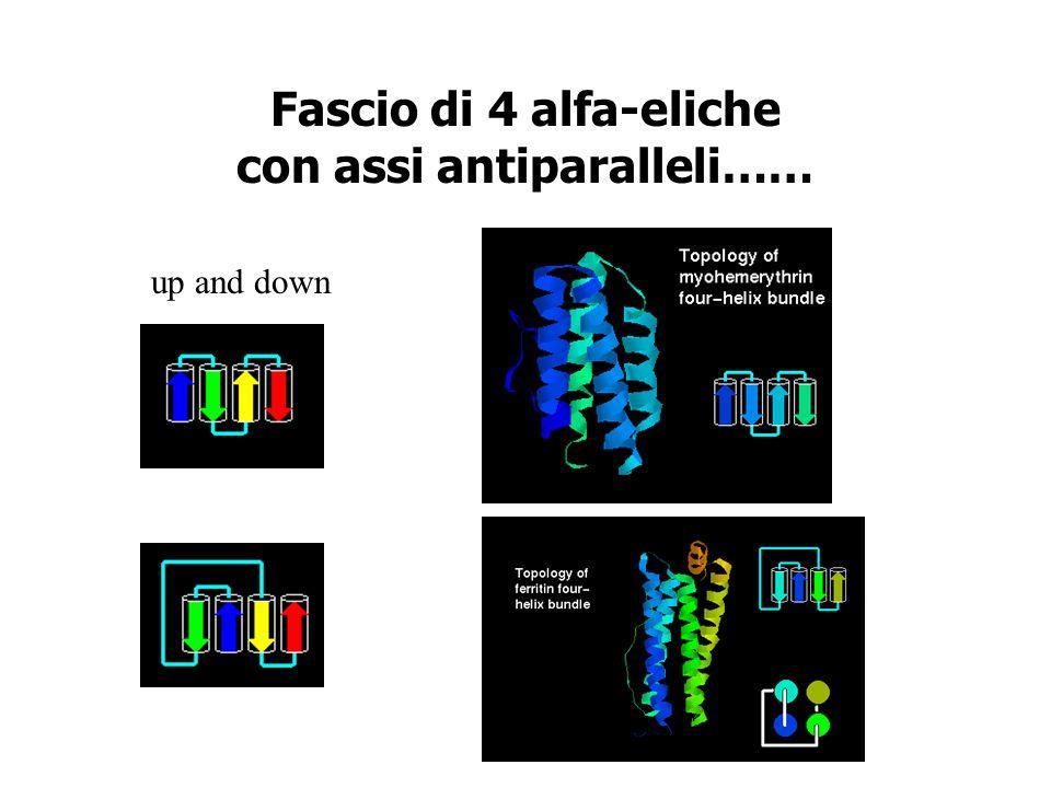 Fascio di 4 alfa-eliche con assi antiparalleli……