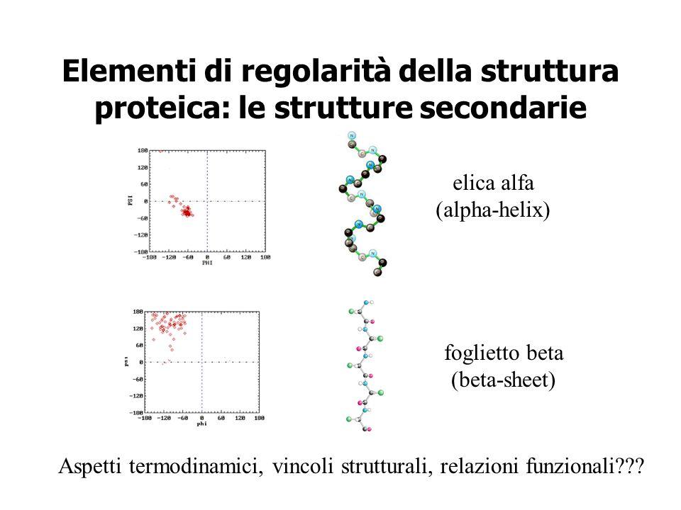 Elementi di regolarità della struttura proteica: le strutture secondarie