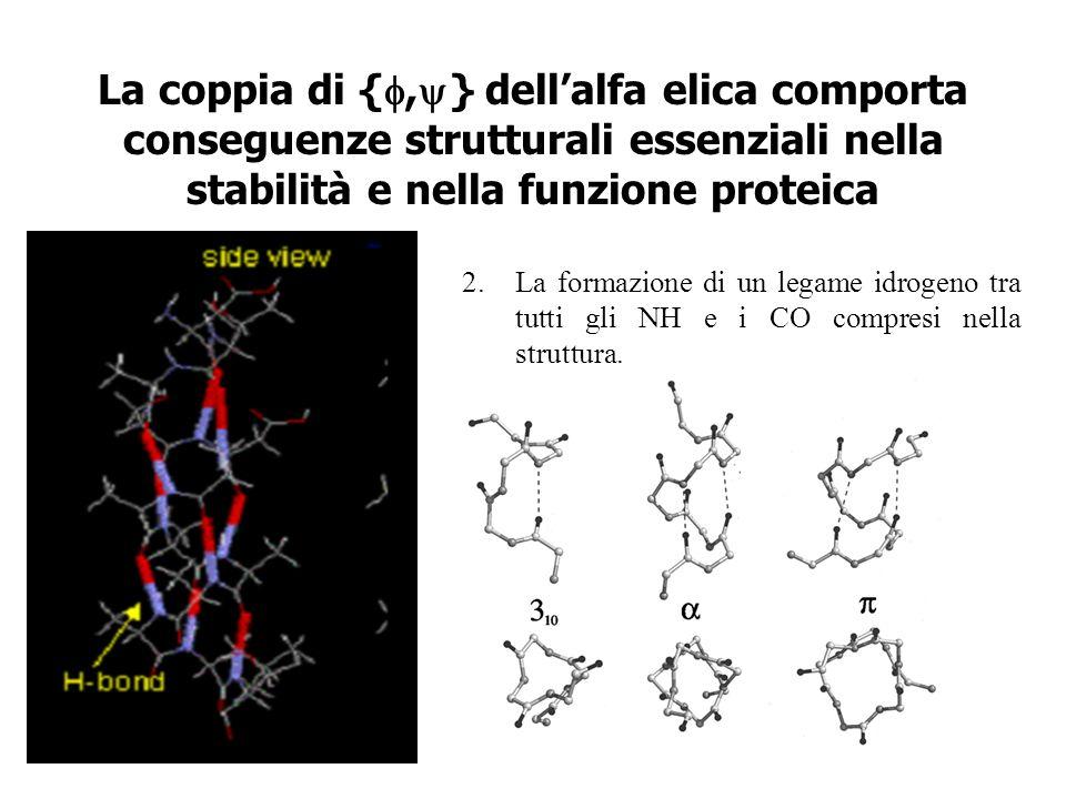La coppia di {f,y} dell'alfa elica comporta conseguenze strutturali essenziali nella stabilità e nella funzione proteica