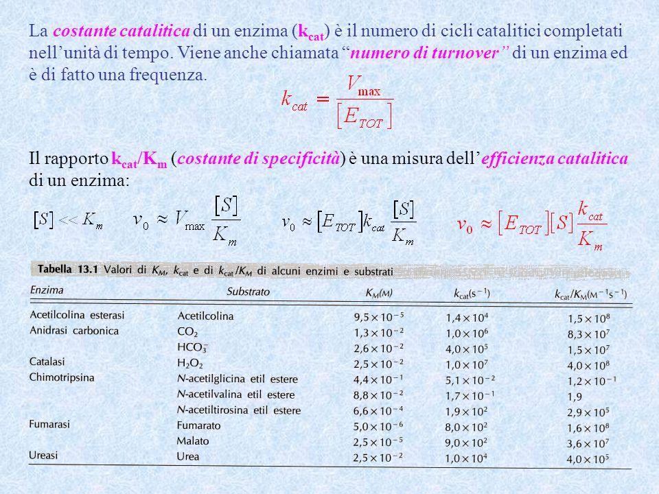 La costante catalitica di un enzima (kcat) è il numero di cicli catalitici completati