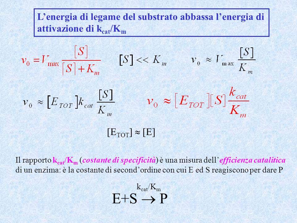 E+S  P L'energia di legame del substrato abbassa l'energia di