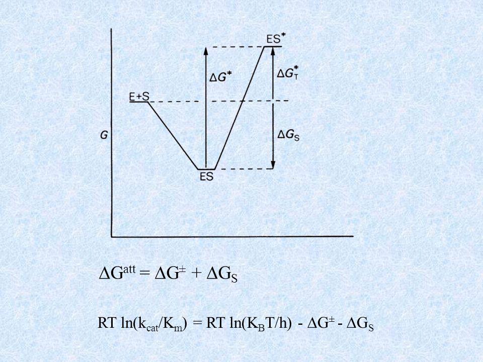 Gatt = G± + GS RT ln(kcat/Km) = RT ln(KBT/h) - G± - GS