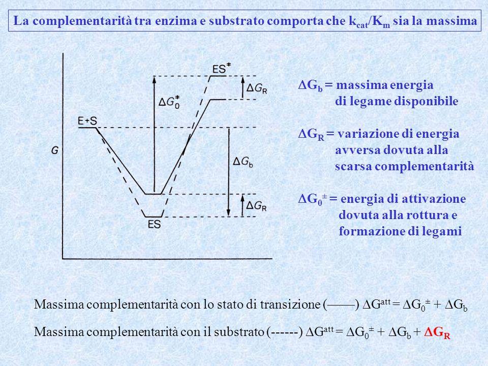La complementarità tra enzima e substrato comporta che kcat/Km sia la massima