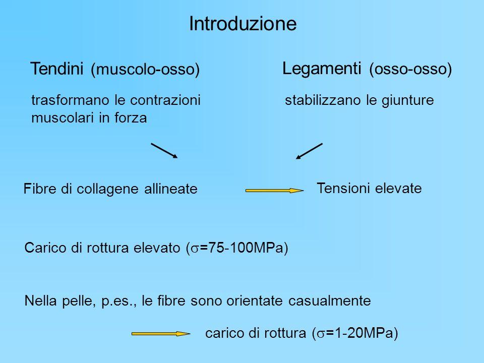 Introduzione Tendini (muscolo-osso) Legamenti (osso-osso)