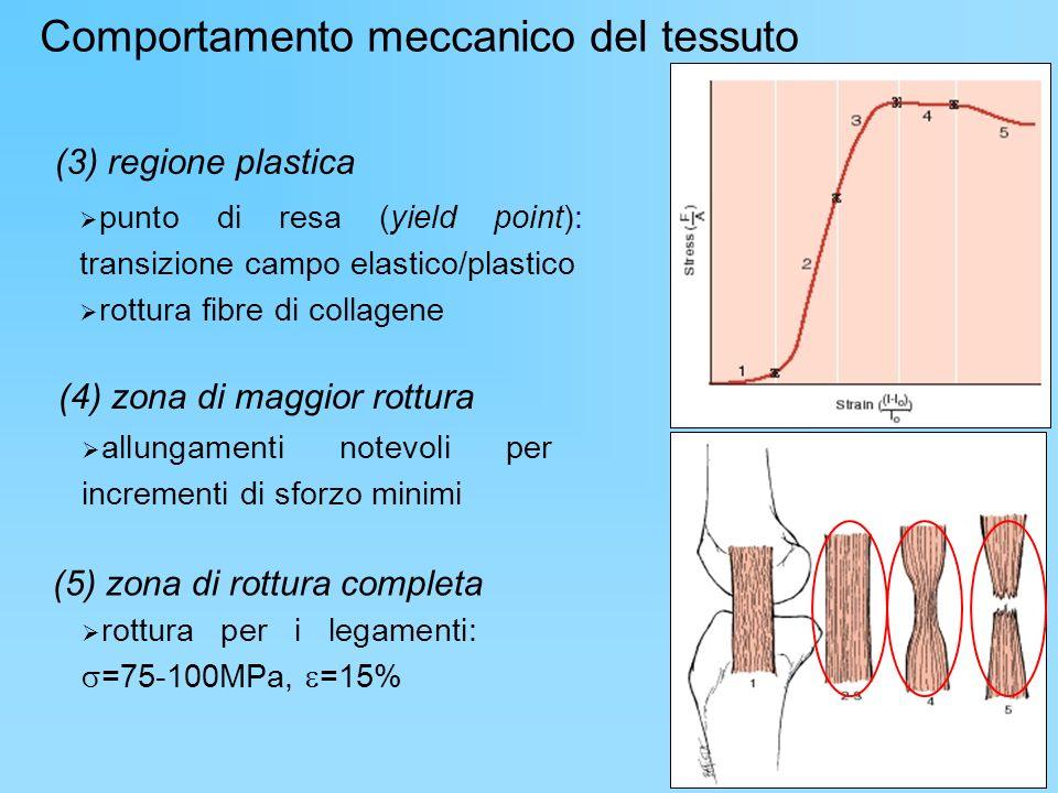 Comportamento meccanico del tessuto