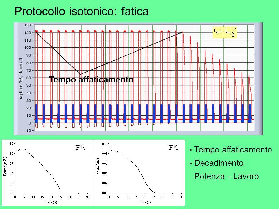 Protocollo isotonico: fatica