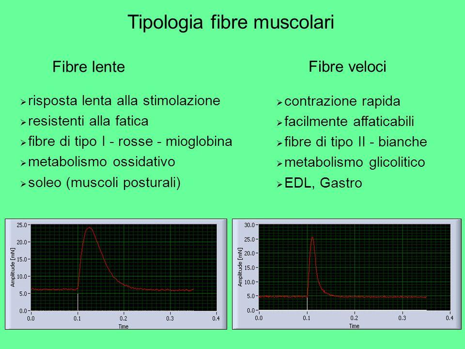 Tipologia fibre muscolari