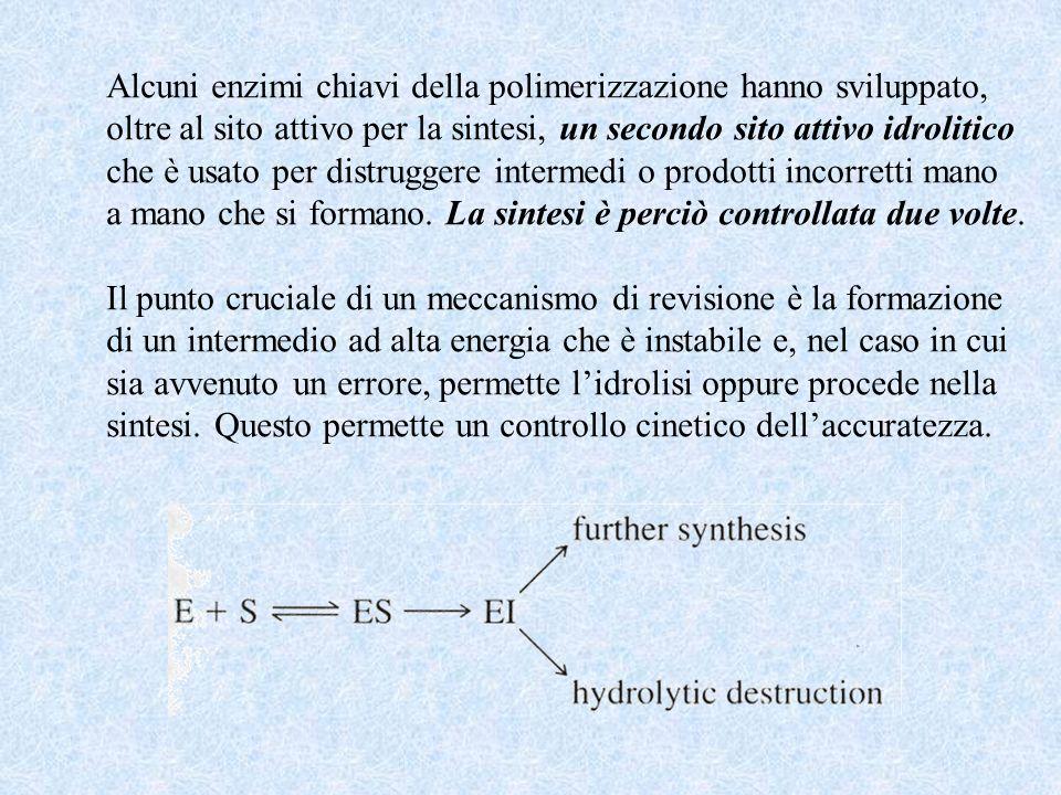 Alcuni enzimi chiavi della polimerizzazione hanno sviluppato,