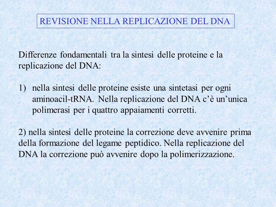 REVISIONE NELLA REPLICAZIONE DEL DNA
