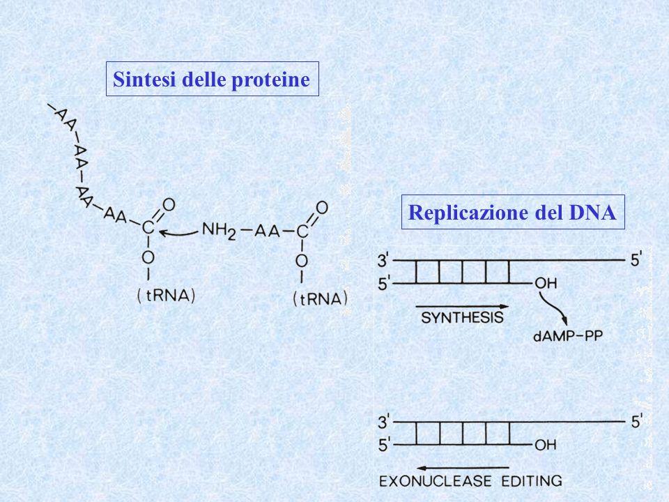 Sintesi delle proteine