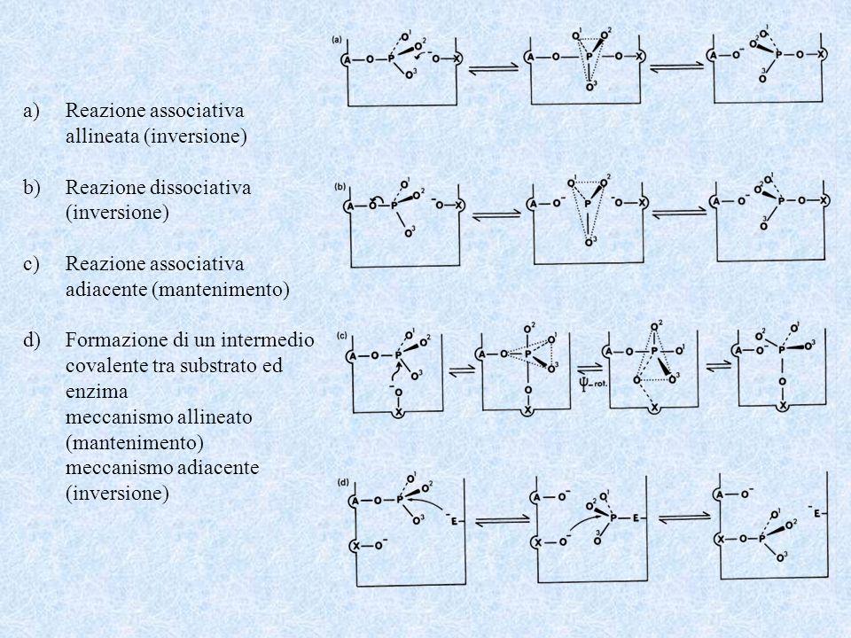 Reazione associativa allineata (inversione) Reazione dissociativa. (inversione) adiacente (mantenimento)